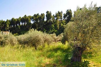 Gouves Noord-Evia | Griekenland | Foto 1